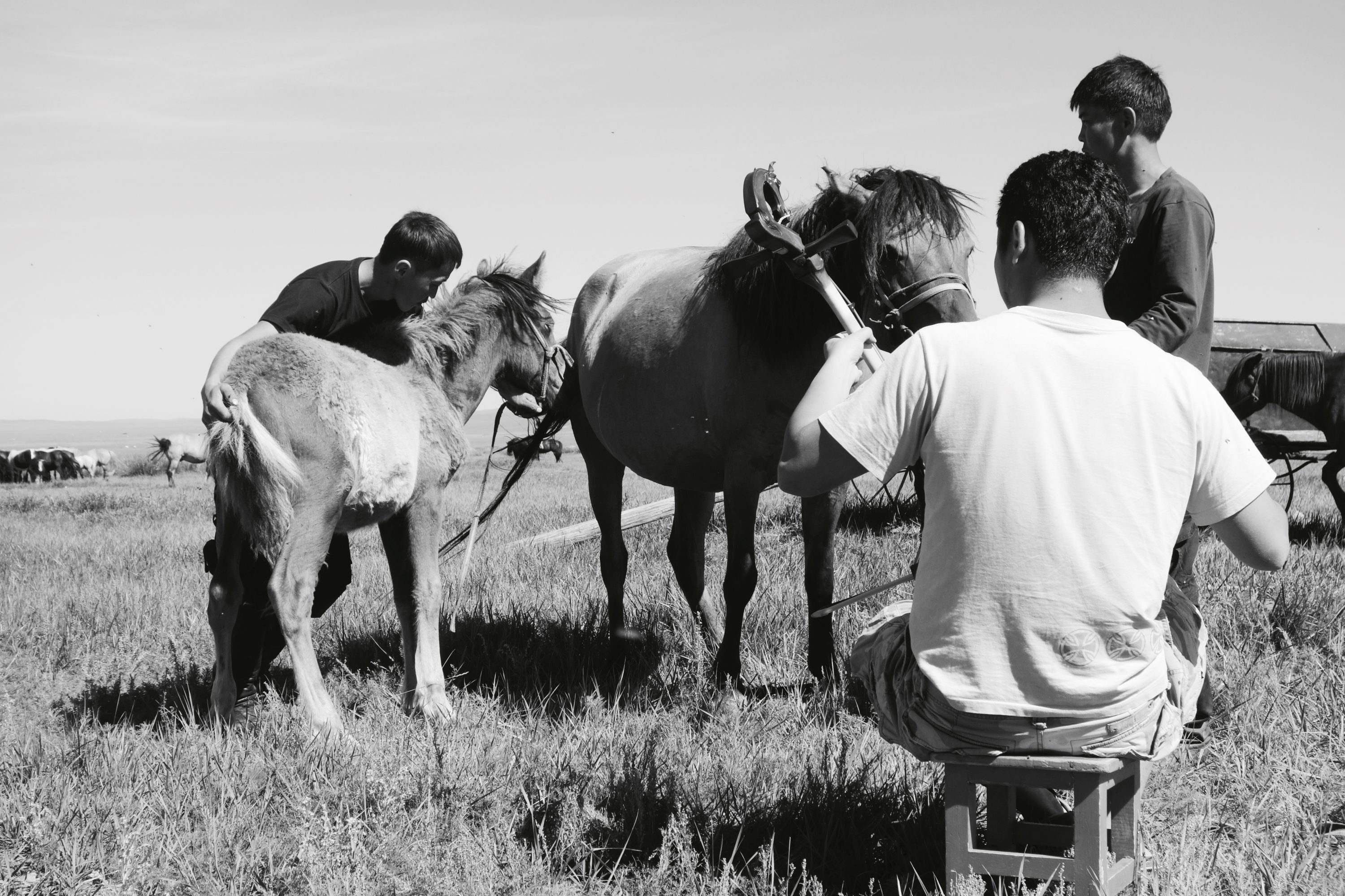 Morin Khuur ritual performance, the purpose of which is to harmonise a new bond between an abandoned foal and their prospective surrogate mare-mother. Suukbaatar Aimag (specific location withheld). 28 August 2013. Photograph: C.Pleteshner